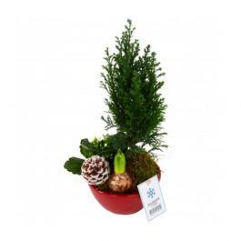 Julgrupp 3-plants mix